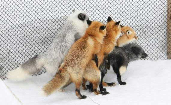 Loading Firefox Plugins